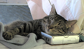 Holiday, the cat, sleeping on the shortwave radio - photograph copyrighted Lorelle VanFossen