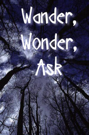 Looking up through trees, Wander Wonder, Ask - photograph copyright Brent VanFossen