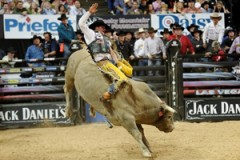 Bull Riding On YouTube