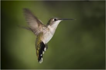 The Google Hummingbird Update and What It Means to Bloggers