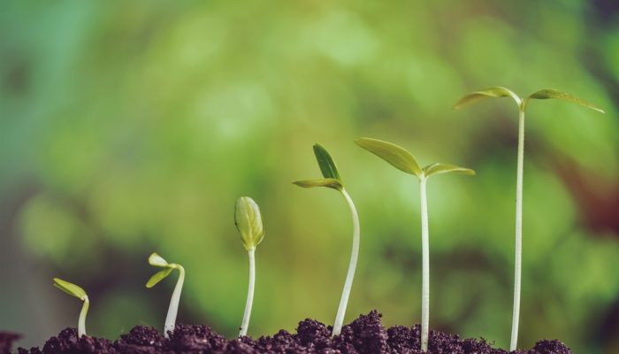 5 Growth Steps to a Profitable Blog